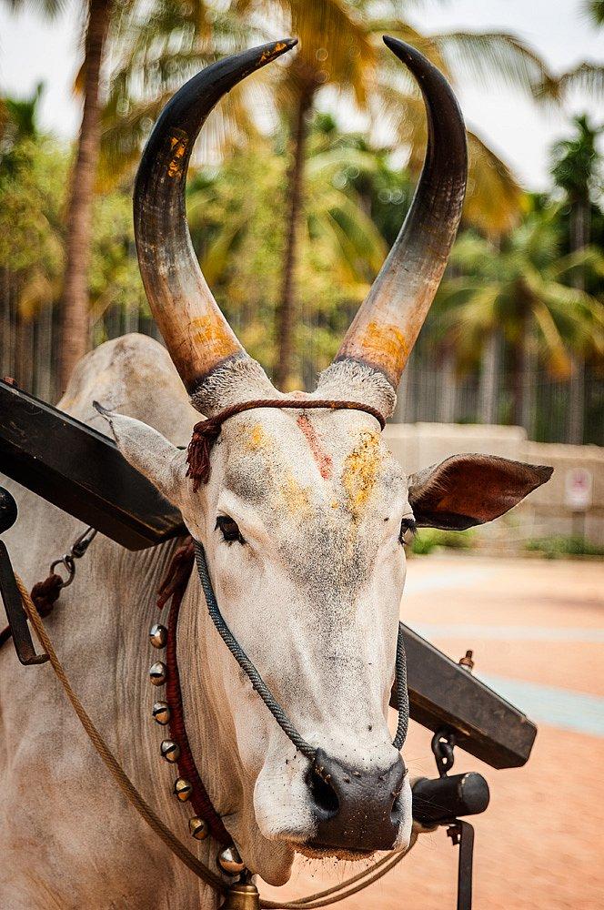 Indien-076.jpg